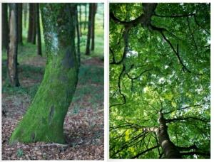 """Herman Hesse """"Bäume"""" ©Dagmar Morath"""